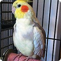Adopt A Pet :: Lucian - Lenexa, KS