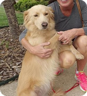 Golden Retriever Mix Dog for adoption in BIRMINGHAM, Alabama - Felicia