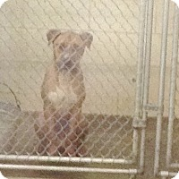 Adopt A Pet :: #461-14 @ Animal Shelter - Zanesville, OH