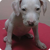 Adopt A Pet :: Timmy - Gary, IN