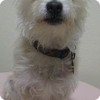 Adopt A Pet :: Claire - Gary, IN