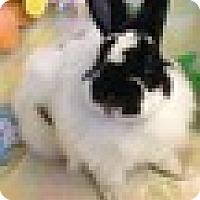 Adopt A Pet :: Pepper Nugget - Paramount, CA
