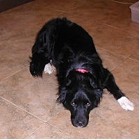 Retriever (Unknown Type) Mix Dog for adoption in Acworth, Georgia - Patrick