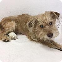 Adopt A Pet :: Helén - Mission Viejo, CA