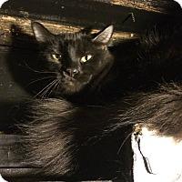 Adopt A Pet :: Kevin - Warren, MI