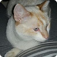 Adopt A Pet :: Pina Colada - Glendale, AZ