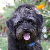 Adopt A Pet :: ROBBIE - Newport Beach, CA
