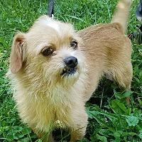 Adopt A Pet :: Fizz - Cincinnati, OH