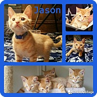 Adopt A Pet :: Jason - Arlington/Ft Worth, TX
