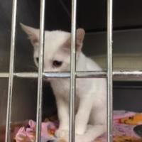 Adopt A Pet :: Bishop - Lancaster, SC