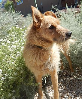 Terrier (Unknown Type, Medium)/Terrier (Unknown Type, Medium) Mix Dog for adoption in Apple Valley, Utah - Stir Fry
