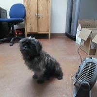Adopt A Pet :: Brady - Clarksville, AR