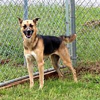 Adopt A Pet :: INGRID-FOSTER NEEDED - Washington, DC