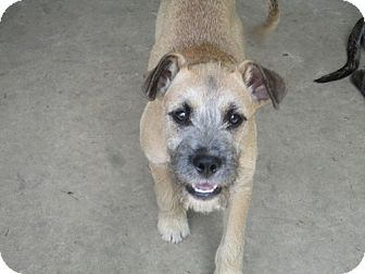 Terrier (Unknown Type, Medium) Mix Puppy for adoption in Jesup, Georgia - Tucker