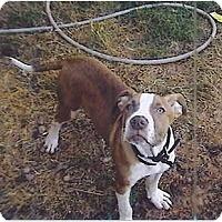 Adopt A Pet :: Murdoc - Flint (Serving North and East TX), TX