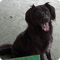 Adopt A Pet :: Dakota - Santa Monica, CA