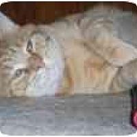 Adopt A Pet :: Bill Jack - North Boston, NY