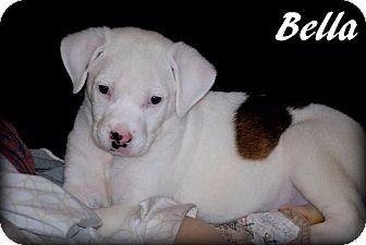 American Bulldog Mix Puppy for adoption in Grand Bay, Alabama - Bella