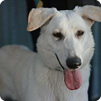 Adopt A Pet :: Cloud - Canoga Park, CA