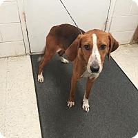Adopt A Pet :: Ray - Lancaster, VA