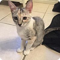 Adopt A Pet :: Emi - Fountain Hills, AZ