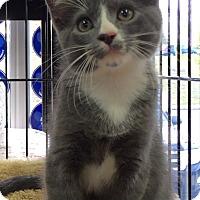 Adopt A Pet :: Pablo - Horsham, PA