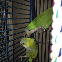 Adopt A Pet :: Baby & Birdie - Punta Gorda, FL