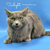 Adopt A Pet :: Twilight - Overland Park, KS