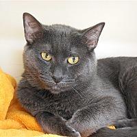 Adopt A Pet :: Liam - Carmel, NY