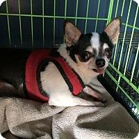Adopt A Pet :: Bea - Kansas city, MO