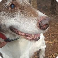 Adopt A Pet :: Conelly - Savannah, GA
