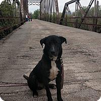 Adopt A Pet :: Charlie - Wichita Falls, TX
