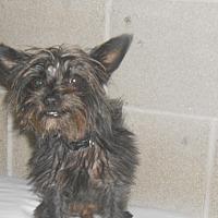 Adopt A Pet :: Rascal - Lockhart, TX