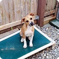 Adopt A Pet :: Rock - Freeport, ME
