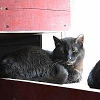 Adopt A Pet :: Daniel - Wichita, KS