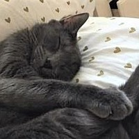 Adopt A Pet :: Squishie - Encinitas, CA
