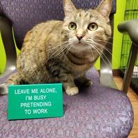 Adopt A Pet :: Aubree Jean - Dodgeville, WI