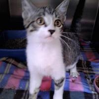 Adopt A Pet :: Trixie - Rio Rancho, NM