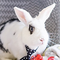 Adopt A Pet :: Steven - Montclair, CA