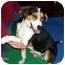 Photo 1 - Greater Swiss Mountain Dog Mix Dog for adoption in Floyd, Virginia - Beau