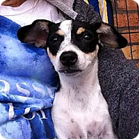 Adopt A Pet :: Jersey Cowgirl - North Hollywood, CA