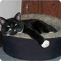 Adopt A Pet :: Ferdinand - Secaucus, NJ