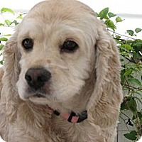 Adopt A Pet :: Casey - BC Wide, BC