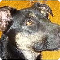Adopt A Pet :: Bandit - Plainfield, CT