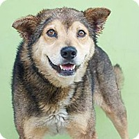 Adopt A Pet :: Ulysses - FOSTER NEEDED! - Los Angeles, CA