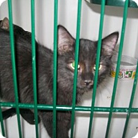 Adopt A Pet :: Eyore - Hamilton, ON