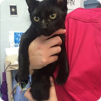 Adopt A Pet :: Betty Boop - Richboro, PA