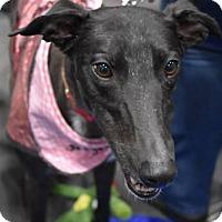 Adopt A Pet :: Mandy - Independence, MO