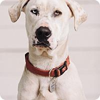 Adopt A Pet :: Crawford - Portland, OR