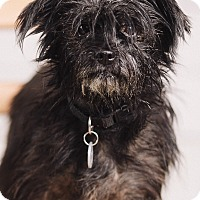 Adopt A Pet :: Lady - Portland, OR